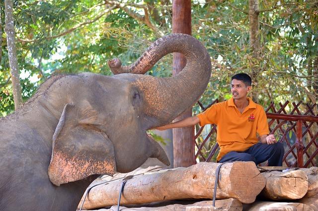 krmení slona