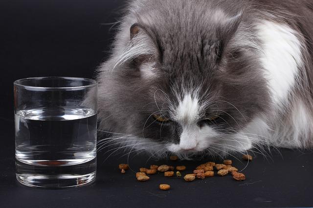 Aby kočka spokojeně vrněla