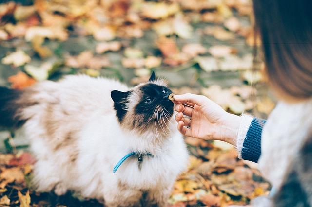 kočka podzim pamlsek
